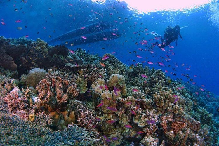 Beragam jenis terumbu karang tumbuh dengan subur di Teluk Tomini, Parigi Moutong, Sulawesi Tengah. Hal ini disebabkan oleh kondisi perairannya yang kondusif, seperti arus yang tenang dan cahaya matahari yang cukup. Airnya sangat tenang karena bersada di teluk yang luas, sehingga aman bagi para penyelam. Teluk ini menjadi salah satu destinasi selam yang disebut-sebut akan menjadi komoditas unggul milik Kabupaten Parigi Moutong.