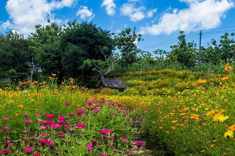 Keindahan Taman Bunga Telaga Malingan, Gunungkidul.