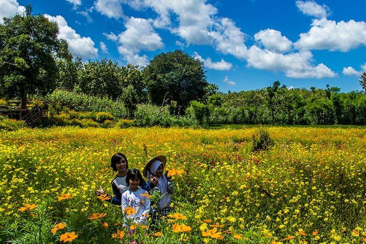 Pengunjung berpose dengan latar hamparan bunga di Taman Bunga Telaga Malingan, Gungungkidul (02/02/2019).