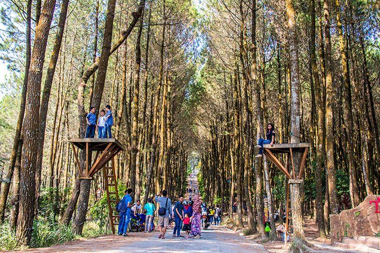 Wisata Hutan Pinus Kragilan di Magelang yang Instagramable.