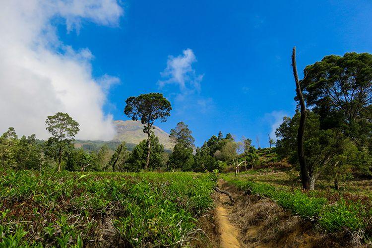 Pendakian Menuju Gunung Sumbing Lewat Kebun Teh Tambi.