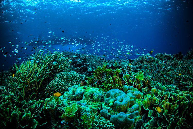 Keindahan Taman Laut Bunaken di Manado, Sulawesi Utara.