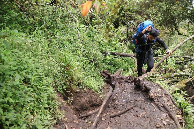 Pendaki menyusuri jalur pendakian Gunung Slamet via Bambangan, Purbalingga, Jawa Tengah. Gunung Slamet merupakan salah satu gunung api aktif di Indonesia.