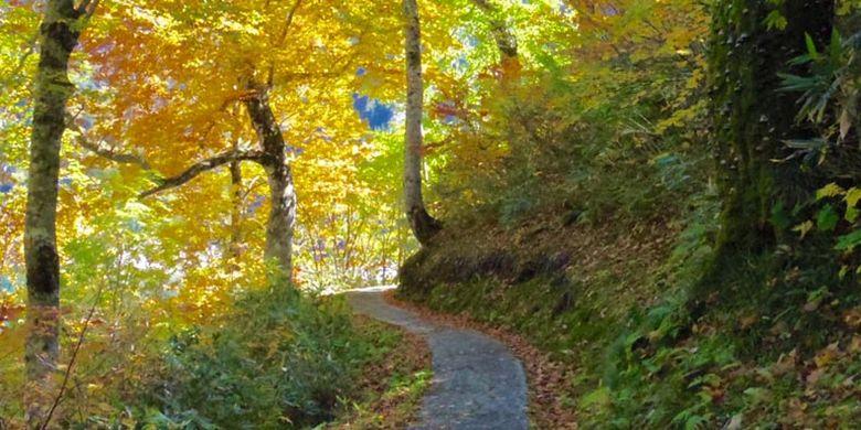 Waktu menikmati pemandangan sambil berjalan kaki menuju Bendungan Kurobe di Jepang ini konon paling baik saat musim semi dan musim panas ketika dedaunan masih hijau, hingga musim gugur di mana dedaunan mulai berubah kemerahan.
