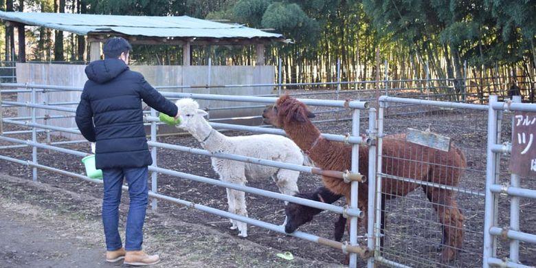Tidak hanya burung unta, di Dacho Oukoku (kerajaan burung unta), Jepang, ini juga ada area bernama Minami no Makiba di mana wisatawan dapat bermain dengan lebih dari 50 jenis hewan seperti kanguru dan kuda poni.