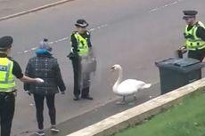 Polisi Skotlandia Pakai Perisai dan Roti Atasi Ulah Angsa
