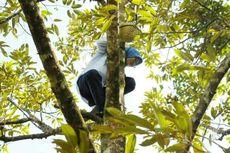 Cerita di Balik Aksi Unik Bupati Lebak Memanjat Pohon Durian
