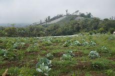 Menilik Hasil Perkebunan dan Peternakan Desa Sumber Urip di Bengkulu