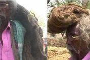 Selama 40 Tahun, Pria Ini Tak Keramas dan Potong Rambut