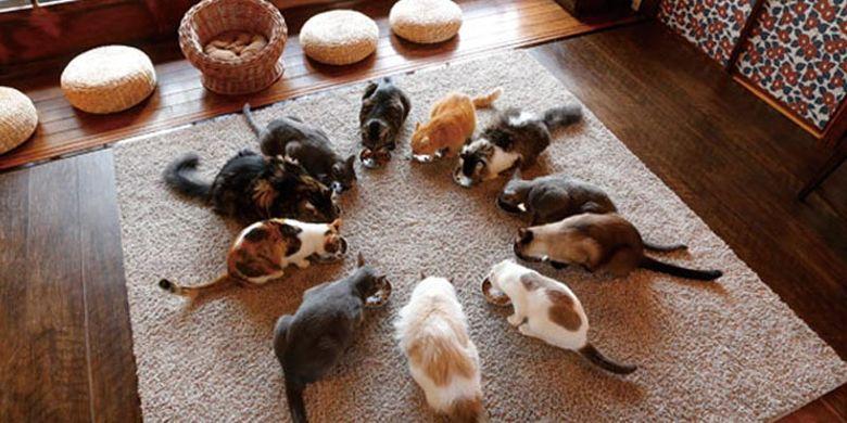 Cat Apartment Coffee di Kyoto, Jepang, merupakan kafe kucing dengan 15 ekor kucing idola yang viral di medsos.