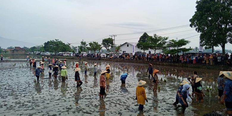 Kementan mengapresiasi langkah Distanbun Jateng tanggung biaya asuransi petani miskin