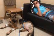 Meski Ditembak 4 Kali, Anjing Ini Lindungi Majikannya dari Perampok