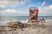 Penyu Langka Mati Terjerat Kursi Pantai, Apa Pelajaran untuk Kita?
