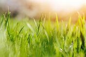 Jejalkan Rumput ke Mulut Ibunya, Pria Ini Ditangkap Polisi