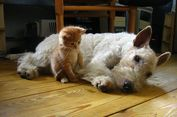 Kucing Bukan Makluk Antisosial, Mungkin Masalahnya pada Kita