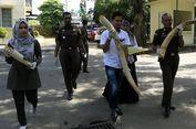 Gading dari Gajah yang Mati Dibunuh di Aceh Diserahkan ke BKSDA