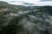 Kerusakan Hutan Aceh Capai 15 Ribu Hektar Tahun 2018
