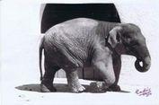 43 Tahun Kesepian, Gajah Paling Menyedihkan di Dunia Mati