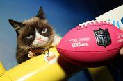 Grumpy Cat, Kucing Bintang Internet Mati dalam Usia 7 Tahun