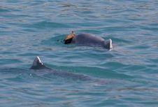 Tidak Kalah dari Manusia, Lumba-lumba Juga Bisa Romantis
