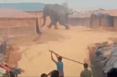 Gajah Hancurkan Kamp Pengungsi Rohingya di Bangladesh, 1 Tewas