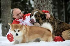 5 Fakta Unik tentang Putin: Pencinta Hewan hingga Sabuk Hitam Judo