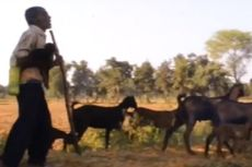 Sabir Khan, Gembala Tuna Netra yang Tak Pernah Kehilangan Kambingnya