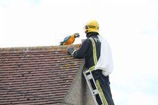 Terjebak 3 Hari di Atap, Burung Ini Malah Berkata Kasar saat Ditolong
