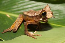 3 Spesies Ini Bangkit dari Kepunahan, Ada yang di Indonesia