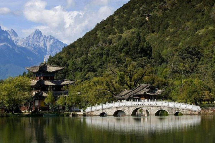 ilustrasi hutan China