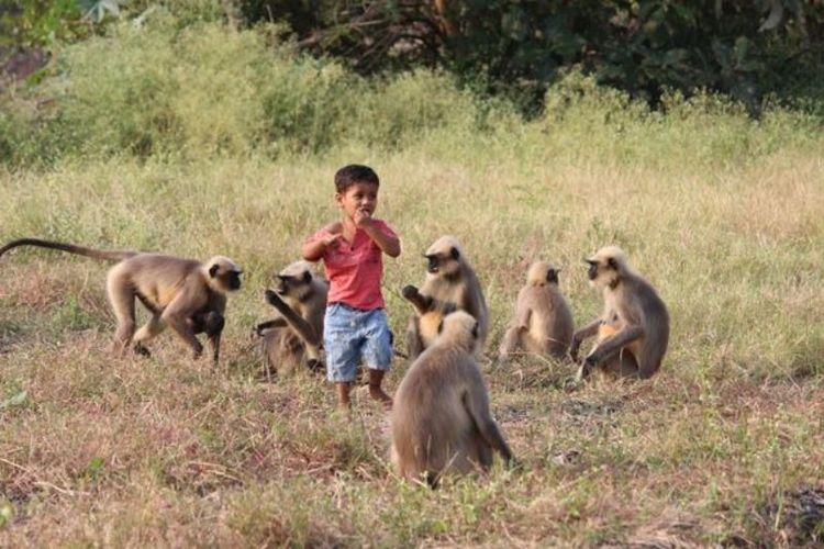Bocah di India Ini Bersahabat dengan Monyet
