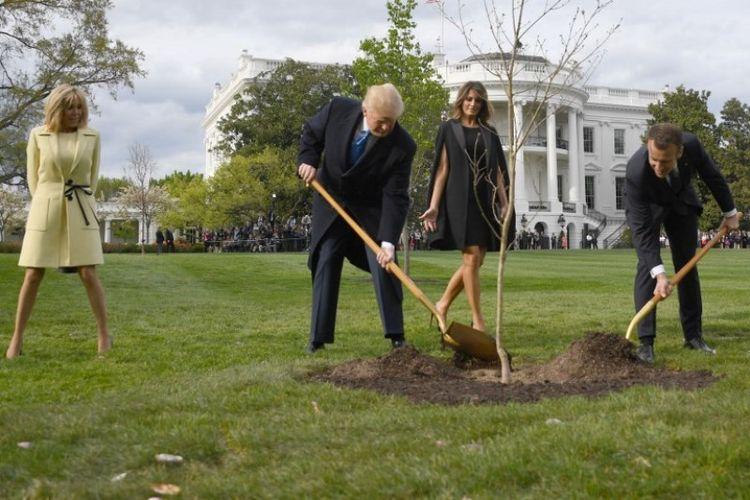 Presiden Amerika Serikat Donald Trump dan Presiden Perancis Emmanuel Macron menyekop tanah untuk menanam pohon di halaman Gedung Putih, Washington DC, Senin (23/4/2018). (AFP/Jim Watson)