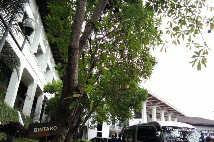 Pohon Bintaro tumbuh di bagian timur Gedung Sate. Buah dari pohon itu ternyata memiliki kandungan berbahaya yang biaa menyebabkan kematian jika dikonsumsi.