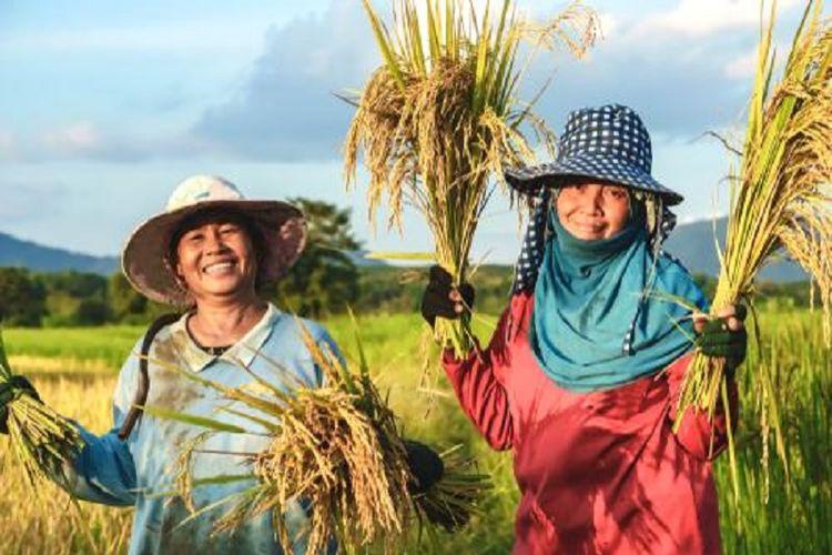 Dua petani padi perempuan sedang menunjukkan hasil panen sawahnya.