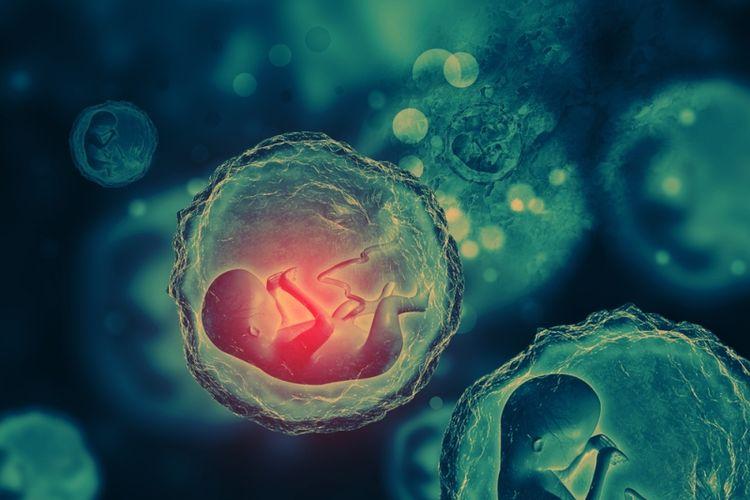Ilustrasi embrio. (Shutterstock)