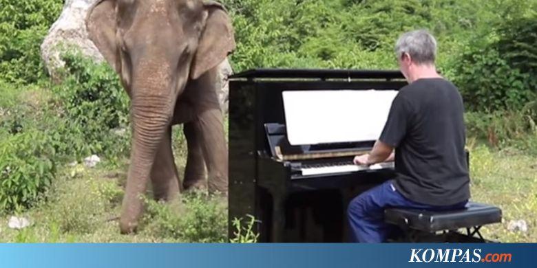 Momen Langka Reaksi Gajah Buta Ketika Diiringi Alunan