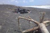 Sampah Plastik Kotori Kawasan Tempat Penyu Membangun Sarang di Pantai Trisik