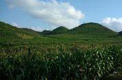 Viral, Ada Bukit Teletubbies di Gunung Kidul Yogyakarta