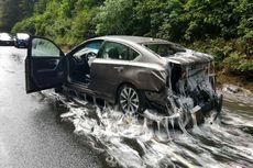 """Belut Purba"" Banjiri Jalan Tol dengan Lendir, Ini Penjelasannya"