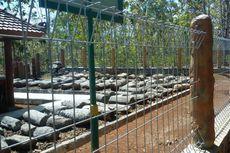 Melihat Situs Manusia Prasejarah di Gunungkidul
