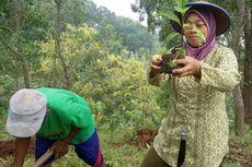 Merayakan Kembalinya Pohon Kopi di Gunung Kidul