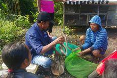 Kisah Pak Lam, Sang Pengepul Ular di Wonogiri