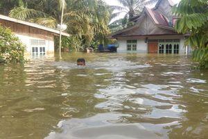 6 Cerita Seputar Banjir di Kampar Riau hingga Hari Ke-7, Warga Mengungsi hingga Belum Terima Bantuan