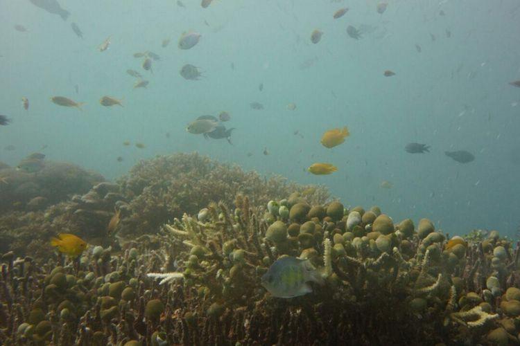 Pemandangan bawah laut di dasar perairan Yenbuba, Raja Ampat, Papua Barat, Kamis (19/10/2017).