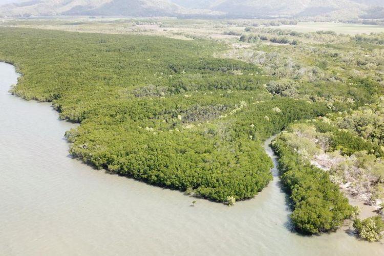 Lokasi sungai di mana pakaian dan tongkat milik Anne Cameron ditemukan. Lokasi ini berada di sebelah selatan Port Douglas.
