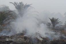 Kebakaran Hutan Kembali Terjadi, Restorasi Dipertanyakan