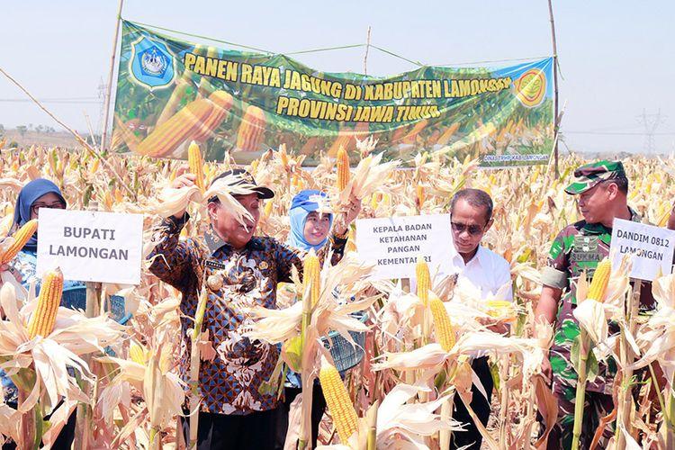 Kepala Badan Ketahanan Pangan Kementerian Pertanian RI Agung Hendriadi (dua dari kanan), saat menghadiri panen raya jagung di Lamongan, Kamis (11/10/2018).