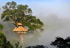 Lewat Jalur Zipline 15 Kilometer, Anda Bisa Tinggal di Rumah Pohon Ini