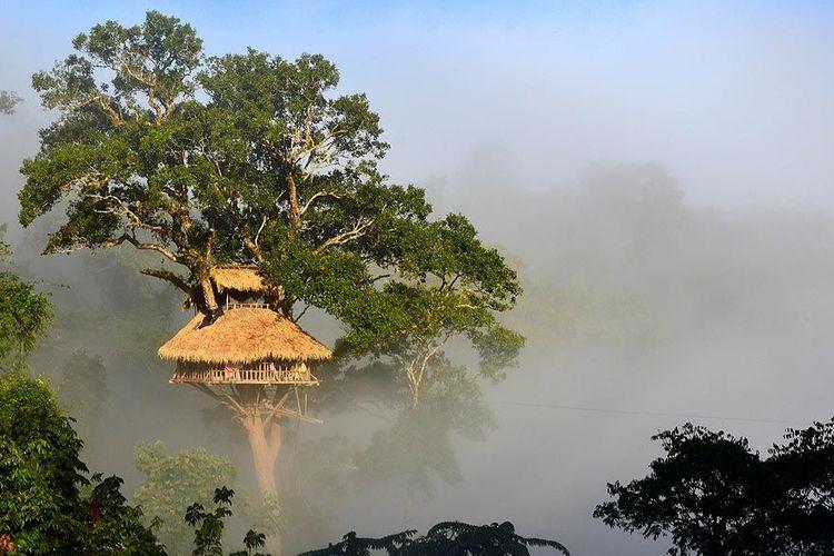 Resor yang berada di tengah hutan Laos ini dibangun di atas pohon setinggi 30-40 meter.