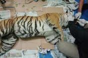 Hutan Sumatera Kian Menipis, Populasi Harimau Tak Sampai 400 Ekor